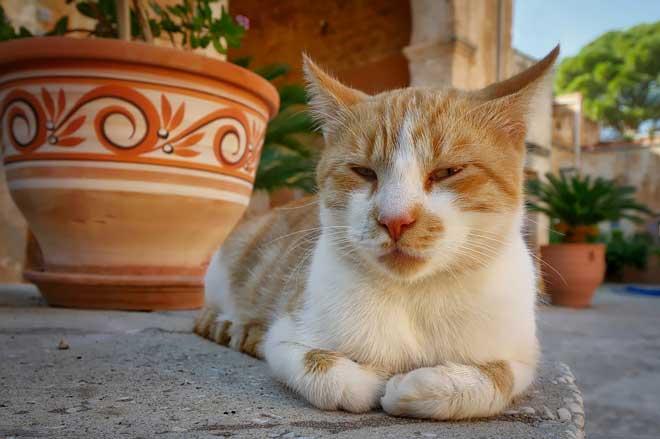 gatos afastam energia negativa